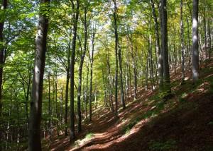 Wald bei Badenweiler; Foto:Fred Häusler